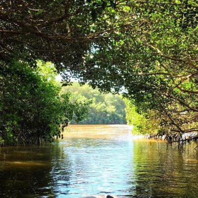 Celestun mangrove