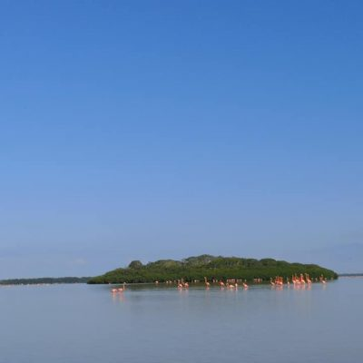 ISLAND OF FLAMINGOS CELESTUN